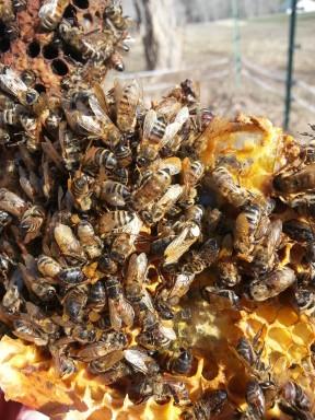 3.12 queen bee