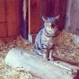 3.17 sister cat