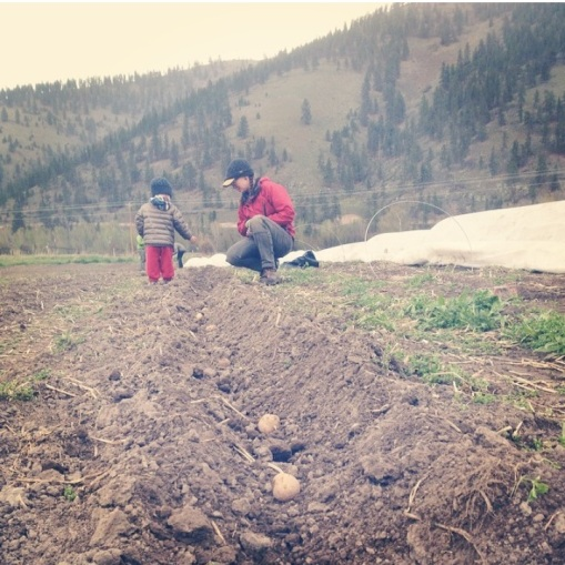 Adrien and Tracy planting potatoes