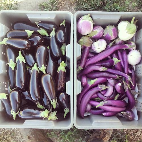 eggplant insta sm