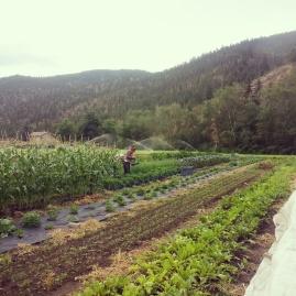 robin harvesting insta