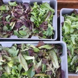 salad insta sm