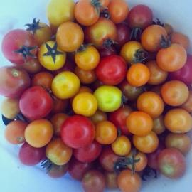 tomatoes insta